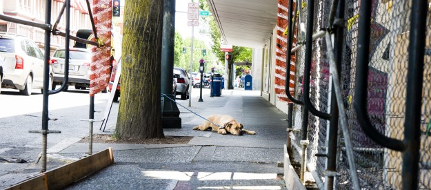 City Dog's Life by Shawna Whelan