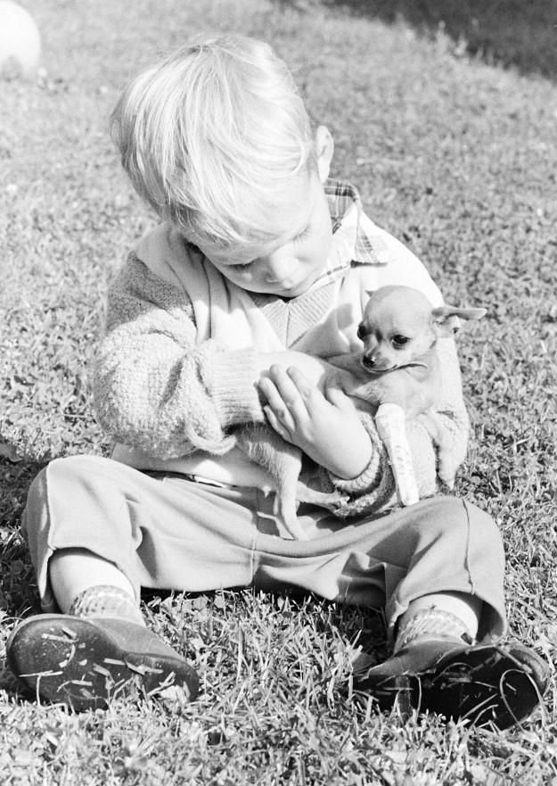 10/16/67 Chihuahua With Broken Leg Richard Ellis / Bremerton Sun