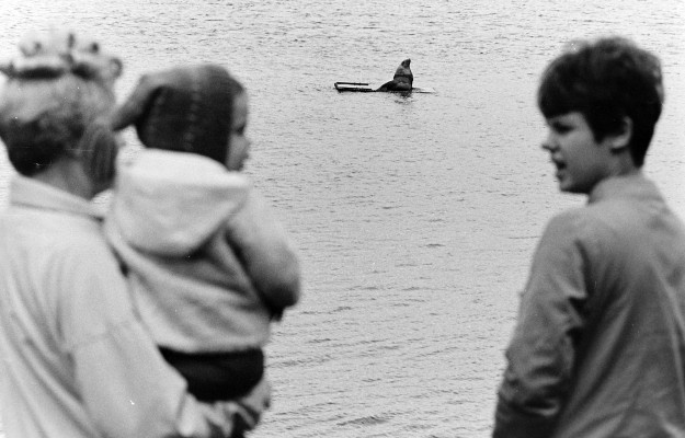 02/21/68 Sea Lion On Hood Canal