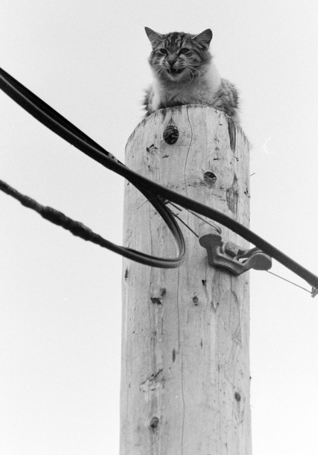 05/03/67 Cat on Power Pole