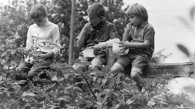 08/16/66 Berry Picking