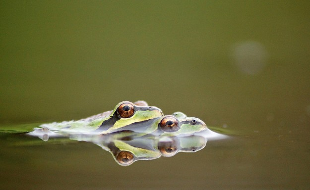 Floating Frogs Embracing by Eli Owens This frame is just stunning in every way: the colors, detail, composition and subject matter (although the subject matter might be a little risquŽ to some but hey these are frogs it is what they do in nature). It really is a perfect photograph.