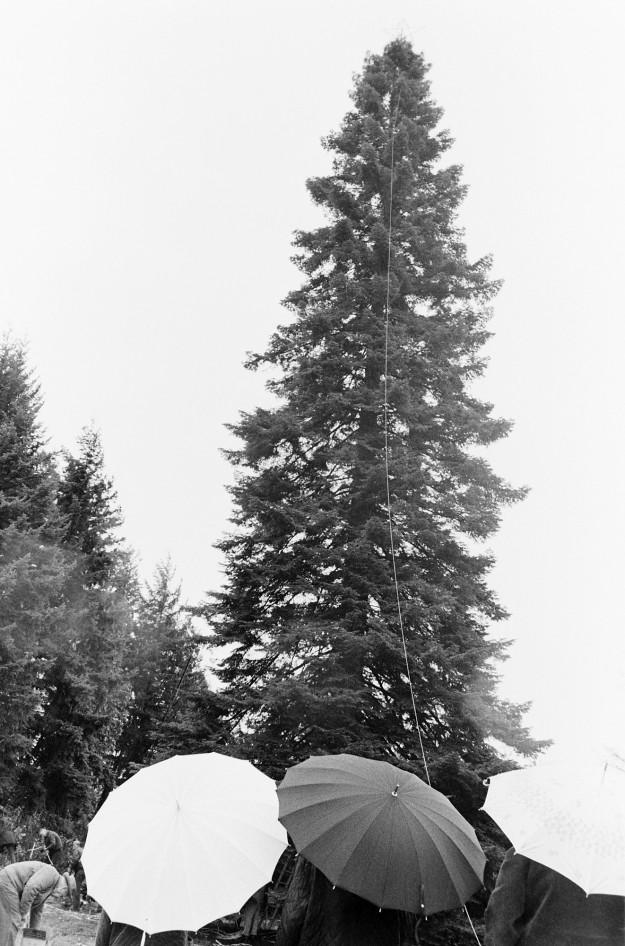 12/04/67 Tracyton Xmas Tree