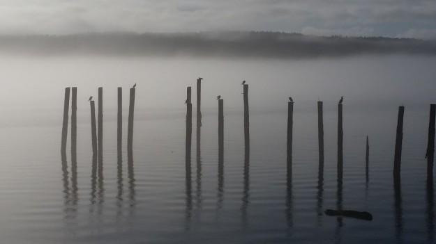 Cormorants in Fog by Joel Colvos