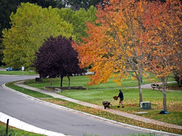 Sisyphus Works For The Parks Department by Steve Johnson