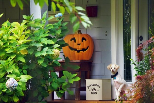 Pumpkin Guard Dog by Jack C. Harpel