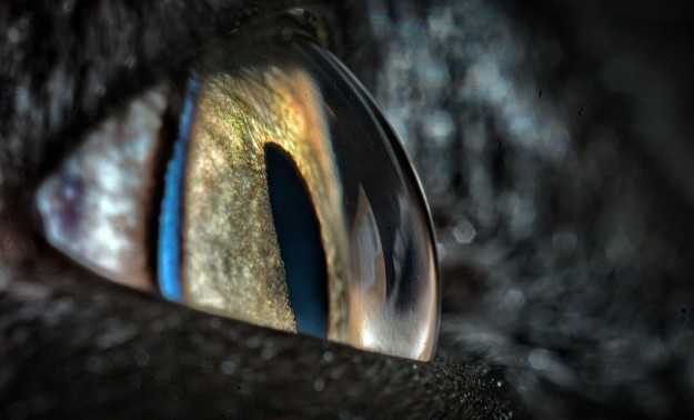 The Eye of Taz by Kent Ferris The colors and crispness of this frame are just stunning! It's also one of those detail shots that one doesn't necessarily need a title to know what the close-up photo subject matter is.