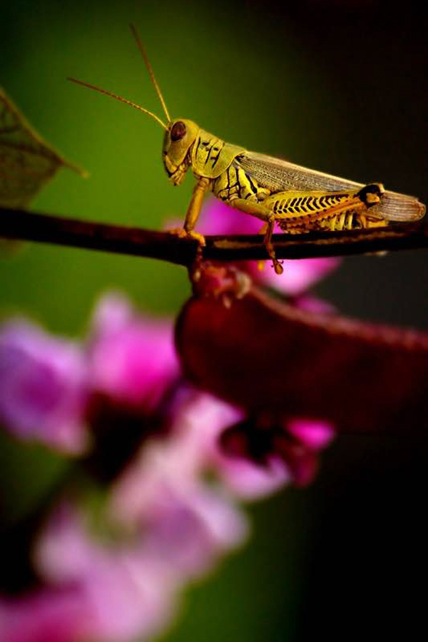 Grasshopper in the Flowers by Eli Owens The saturated colors are lovely as well as complementary in this beautiful image. I also really like the composition of the grasshopper perched on the stem with that pink fower in the background helping to lead the viewer's eye right to it. Oh and the light! Let's not forget the most important aspect of photography: light. The lighting in this image is just perfect.