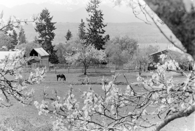 04/22/80 Horse Steve Zugschwerdt / Bremerton Sun