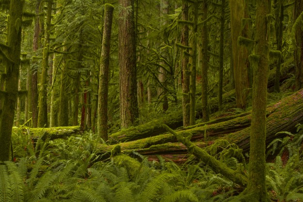 Deep In The Forest by Bryan M. Flynn I love the overall green of this landscape shot by Bryan. Now IÕm not just talking about the green of the moss and the ferns but also the green hue of light across the whole image that happens when the light is hitting so much greenness all at once. It is a lovely landscape shot that truly screams Evergreen State.