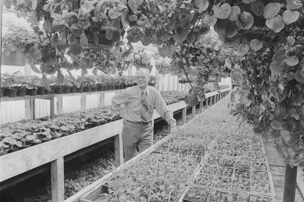 04/10/78 Greenhouse Owner Bob Reeder / Bremerton Sun