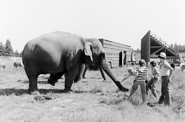06/01/77 PO Elephants Cliff McNair Jr. / Bremerton Sun