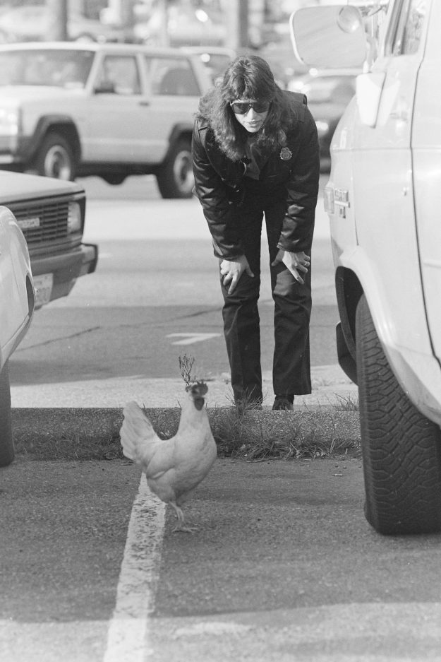 10/26/88 Chicken In Road Theresa Aubin Ahrens / Bremerton Sun