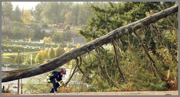 Lt. Doug Weller, of South Kitsap Fire and Rescue, ducks underneath a large tree that had fallen and was leaning precariously on power and cable lines on F Street in Bremerton on Thursday, November 6, 2014. (MEEGAN M. REID / KITSAP SUN)