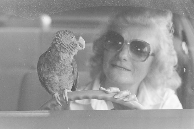 10/02/88 Lady And Parrot