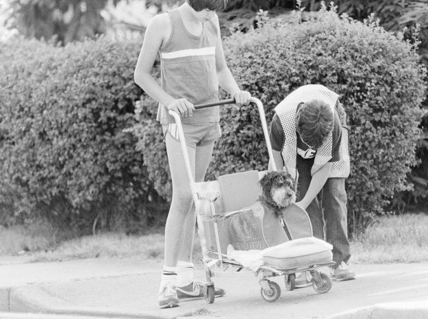 08/04/83 Dog In Stroller Mike Siegel / Bremerton Sun