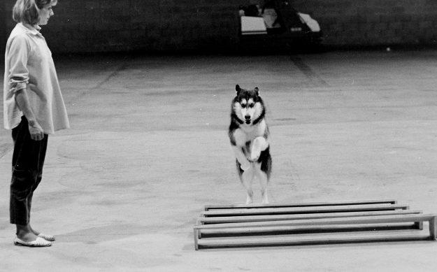 09/15/88 Dog Fanciers Steve Zugschwerdt / Bremerton Sun