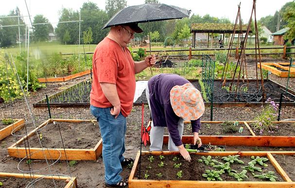 WA Rain Gardening