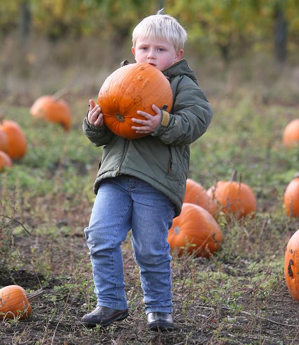 1024_kslo_pumpkin1