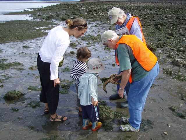 Kitsap Beach Naturalists explaining sea star tube feet to beach goers. Photo: Jeff Adams