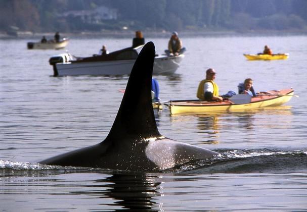 WhaleFin