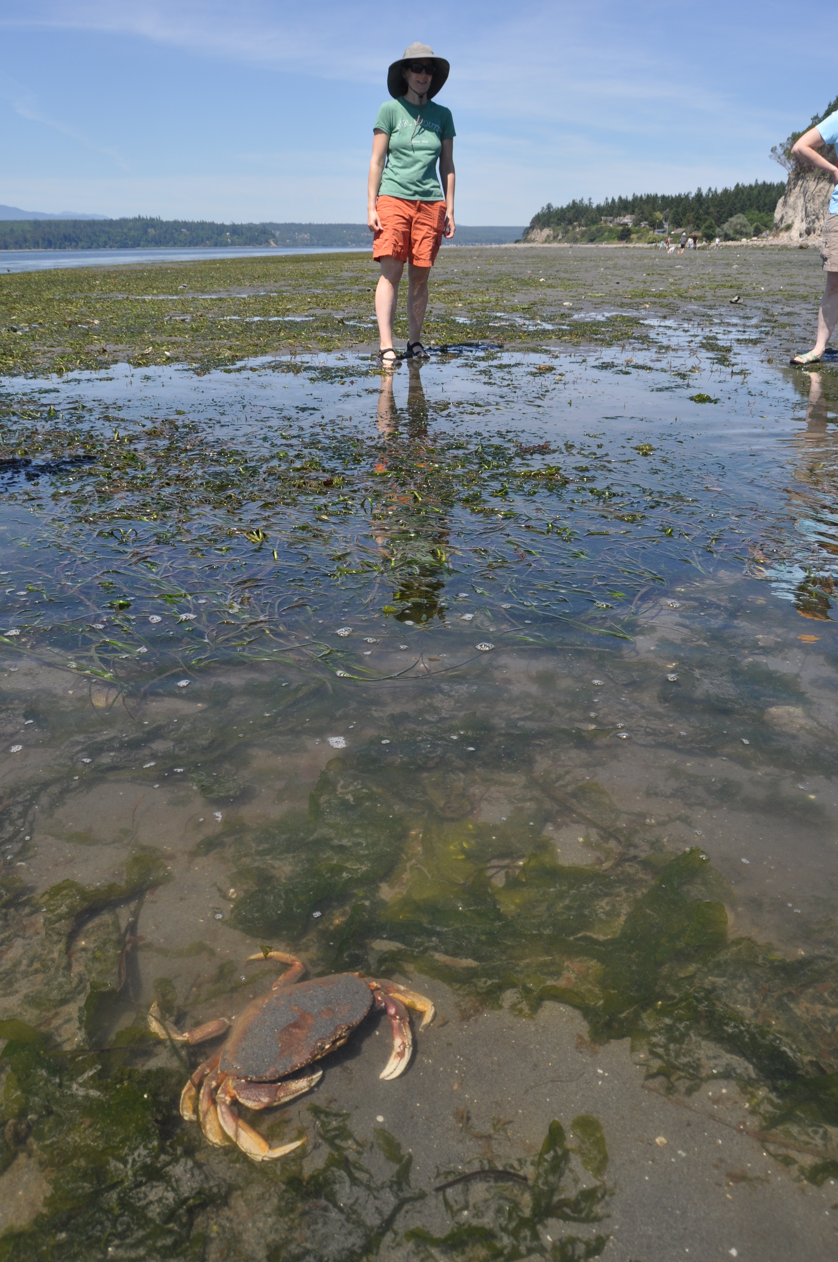 Trails tides tristan baurick the kitsap suns environmental the great weather and midday low tides brought out the crowds on sunday nvjuhfo Gallery