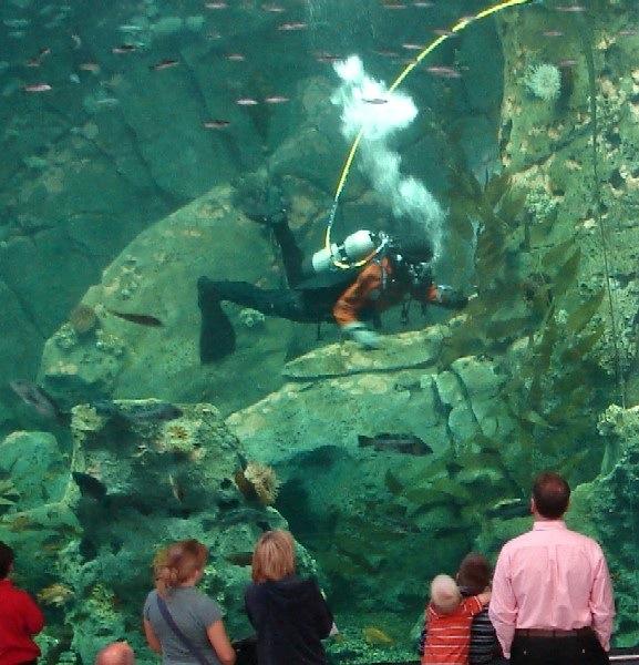 Seattle Aquarium Watching Our Water Ways
