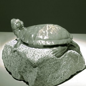 Pond turtle: Recent work by Tony Angell