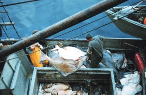 <em> Catch share quotas have been in place for halibut fishing in Alaska for more than a decade</em><br><small>NOAA photo</small>