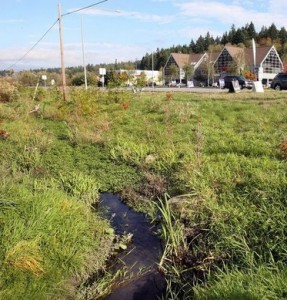 South fork dogfish creek will get gradual makeover for Septic design kitsap county