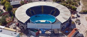 Lolita lives alone in a tank at Miami's Seaquarium. Photo courtesy of Orca Network