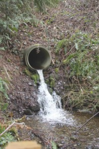 An old culvert on Johnson Creek carries water under Viking Way, a former state highway near Poulsbo.