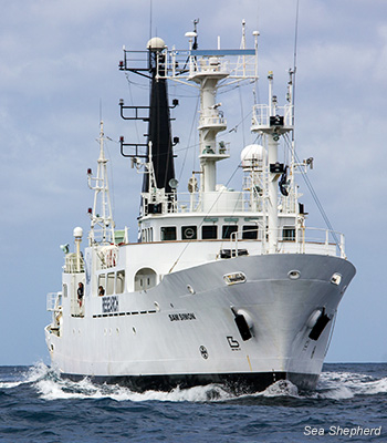 SSS Sam Simon, the newest vessel in the Sea Shepherd fleet.Photo courtesy of Sea Shepherd