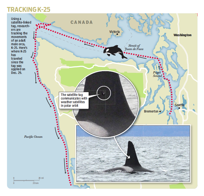 Kitsap Sun graphic shows where K-25 traveled as of Saturday.