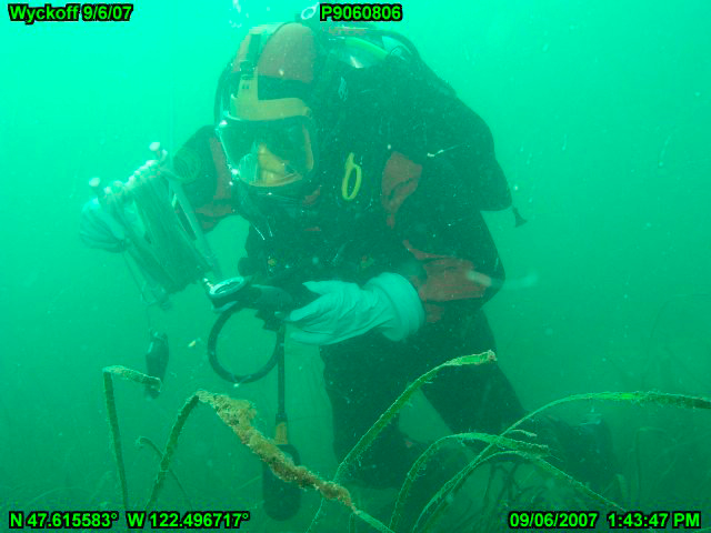 An EPA diver maps eelgrass beds in Eagle Harbor to assess the success of the Wyckoff cleanup project. EPA photo, 2007