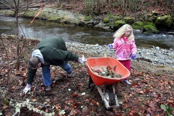 Dan Mullen and his daughter Hailey, 7, remove brush last Saturday along Chico Creek. Kitsap Sun photo by Larry Steagall