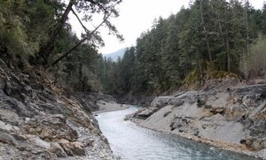 Looking upstream where the Elwha River flows into an empty Lake Mills, the upper reservoir. Photo by Steve Zugschwerdt