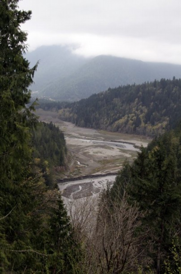 The Elwha River flows through what had been the Lake Aldwell reservoir, fully drained after removal of the Elwha Dam.