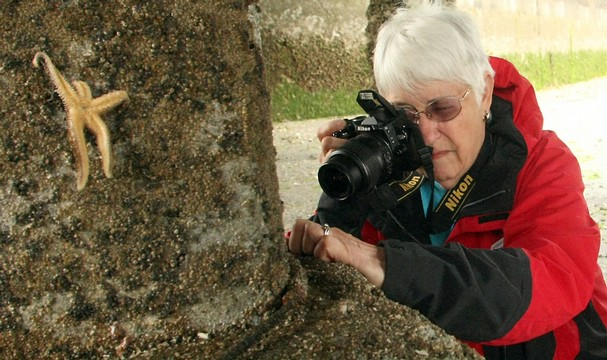 Barb Erickson photographs a sea star afflicted with sea star wasting syndrome. Photo by Meegan M. Reid