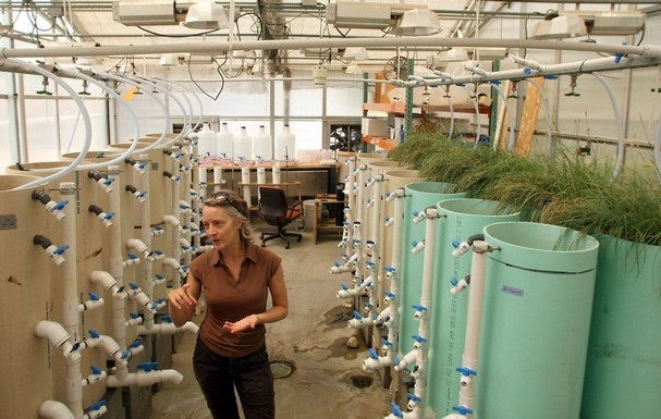 Jenifer McIntyre of the Washington Stormwater Center studies the effects of stormwater after it passes through filters made of compost and soil materials, such as what is used in rain gardens. The filters are working, even though the most dangerous pollutants remain unidentified. Photo by Meegan M. Reid