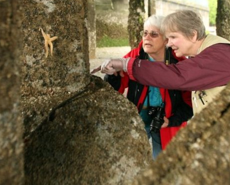 Barb Erickson and Linda Martin examine young sea stars for signs of wasting disease at Lofall pier last summer.