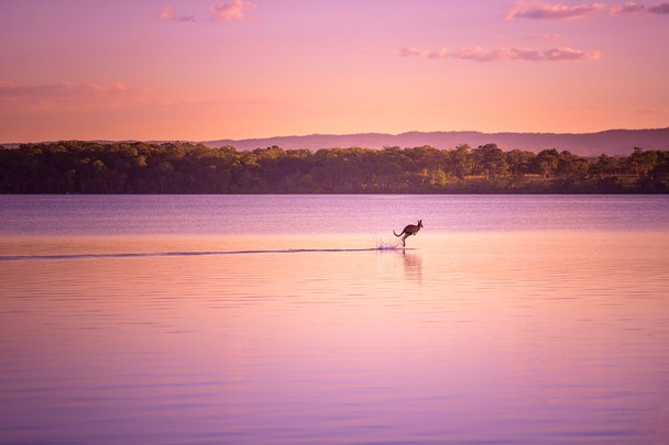Dave Kan was finishing up a photo shoot in Queensland, Australia, when a kangaroo appeared out of nowhere and bounded across the edge of a lake on the Noosa River, as if the animal were walking on water.