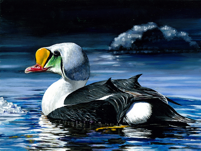 The 2014 winner of the Junior Duck Stamp Contest is 16-year-old Si youn Kim of Tenafly, N.J., who painted a king elder with acrylics. Photo: USFWS