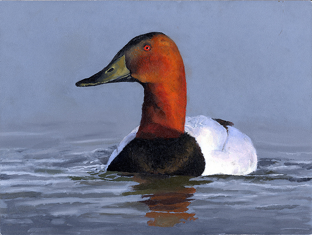 The 2013 winner of the Junior Duck Stamp Contest was 6-year-old Madison Grimm of Burbank, S.D., who painted a canvasback.