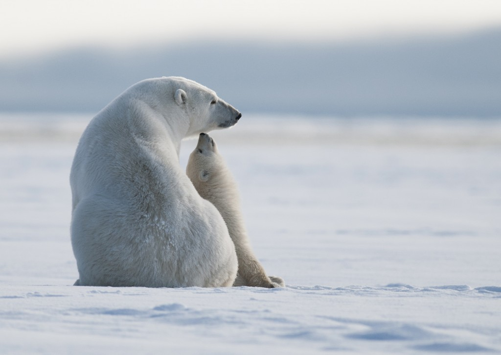 "Cameron Teller's winning photograph in the ""Share the Experience"" contest shows a young polar bear reaching up to its mother. National Park Foundation"