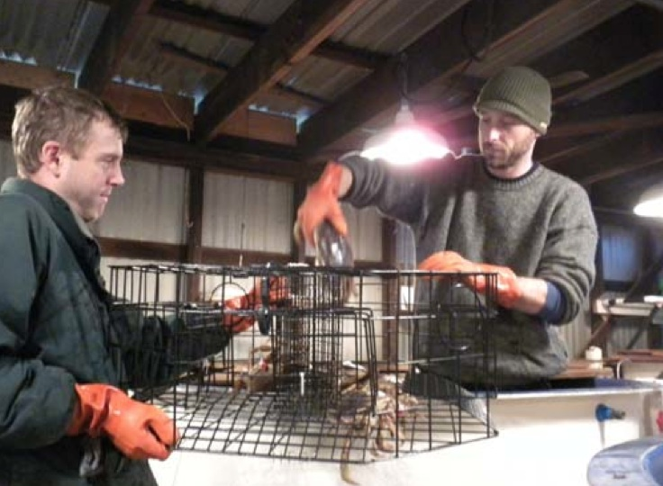 Paul Rudell of Natural Resources Consultants, left, and Jason Morgan of Northwest Straits Foundation place crabs into a trap to test the escape system. Photo: Northwest Straits Foundation