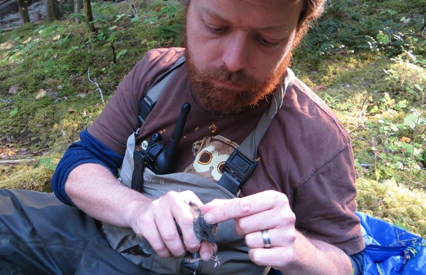 Christopher Tonra of Ohio State University bands an American dipper for future identification.