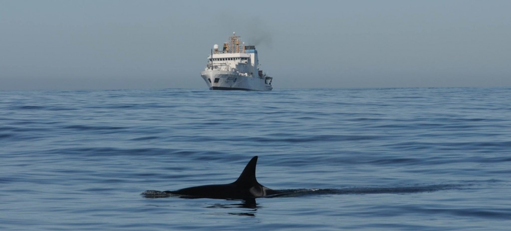 Ocean conditions were nearly perfect for whale research on Thursday. NOAA photo