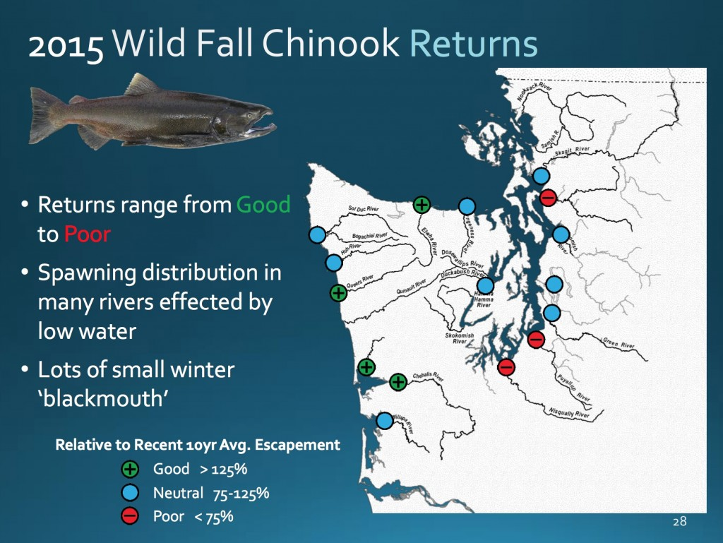 2015 chinook returns