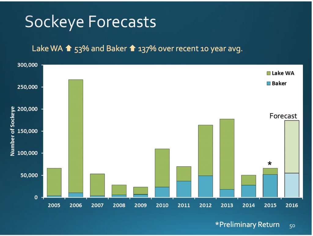 sockeye forecasts